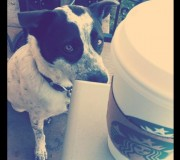Starbucks Stealing Canine